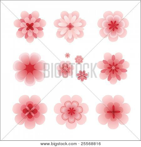 vector pink cherry blossom flowers collection isolated on white background, great decoration elements for special holidays designs