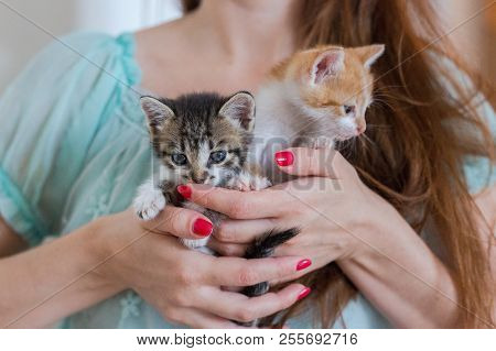 Close Up Of Two Cute Kittens In Woman's Hands.