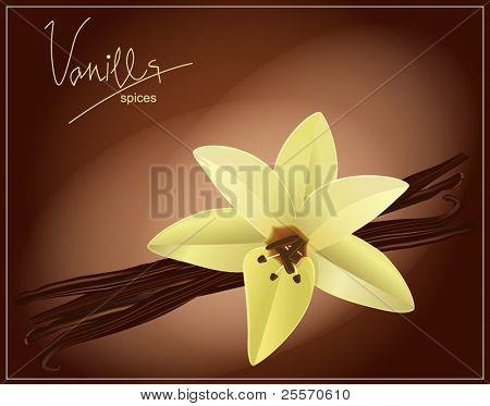 Vektor Blume und Vanille Hülsen auf braun Hintergrund