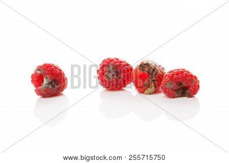 Rotten Raspberries Isolated On White Background. Uneatable Unhygienic Poison.