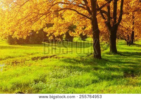 Autumn Forest Landscape. Autumn Trees With Yellowed Foliage In Sunny October Forest Lit By Sunshine.