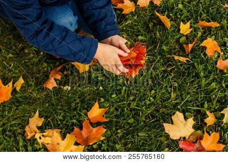 Kids Play In Autumn Park. Children Throwing Yellow And Red Leaves. Little Child In Blue Coat With Ma