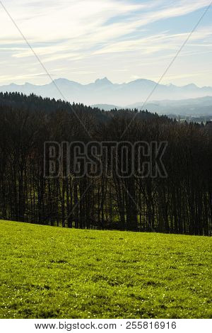 Grass, Woods, Mountain, Sky. Nature Scenery. Morning Walk In The Woods.