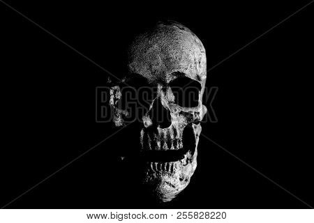 Human Skull. Halloween Human Skull. Evil Skeleton. black and white. Room for text.
