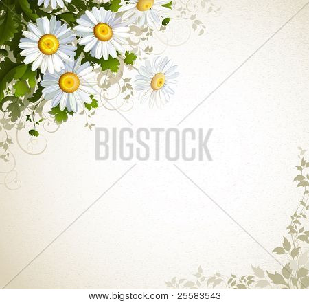 postal with a realistic chamomile on the beige background