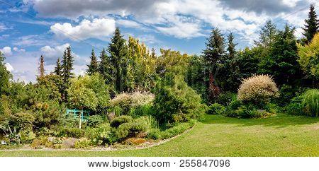 Beautiful Colored Summer Garden