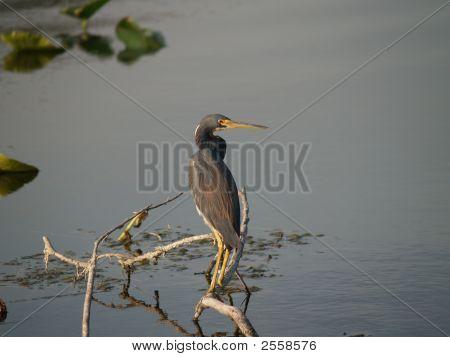Bird On Tree Limb In Lake