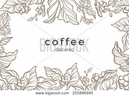 Vector Floral Template Coffee Tree, Bean, Berry, Grain, Branch Nature Banner Aroma Organic Drink, Tr