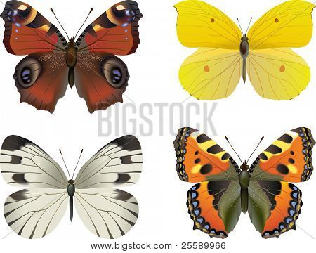 Set of vector realistic butterfly: European Peacock (Inachis io), Tortoiseshell (Vanessa, urticae), Brimstone (Rhodocera Gonopteryx rhamni), White butterfly (Pieris brassicae)