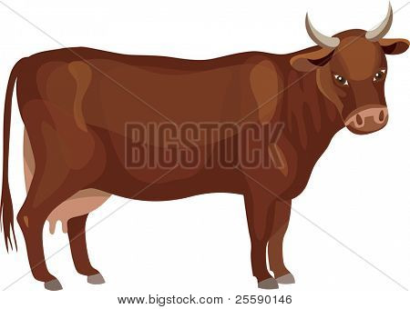 Vector red cow