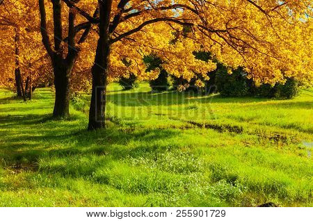 Fall Forest Landscape. Fall Trees With Yellowed Fall Foliage In Sunny October Fall Forest Lit By Sun
