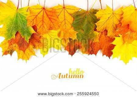 Autumn background with colorful leaves. Red, orange and green autumn leaves.