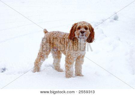 Sneeuw Puppy