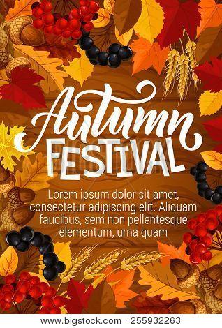 Autumn Festival Poster For Seasonal Fall Fest Or Picnic. Vector Autumn Foliage Design Of Maple Or Ro