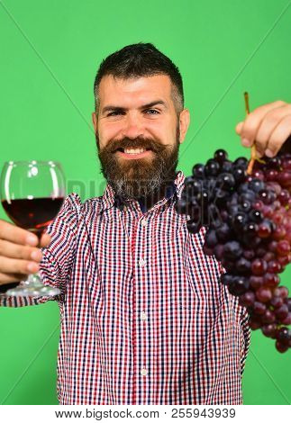 Vintner Shows Harvest. Man With Beard Holds Bunch Of Grapes And Glass Of Wine Isolated On Green Back