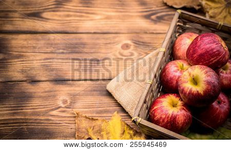 Fall Harvest Cornucopia. Red Apples In The Garden. Copy Space On Wood Background In Autumn Season.