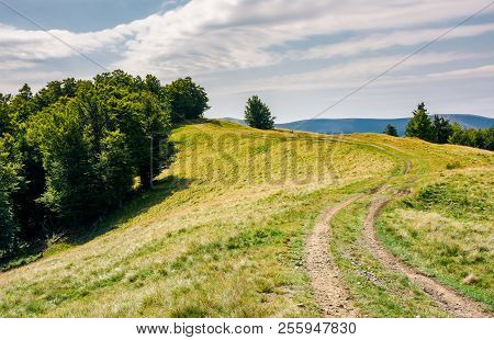Winding Path Uphill In To The Forest. Lovely Summer Scenery.