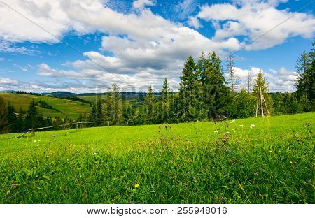 Beautiful Grassy Meadow In Summer. Spruce Trees And Wooden Fence On The Edge Of A Hill. Beautiful Co