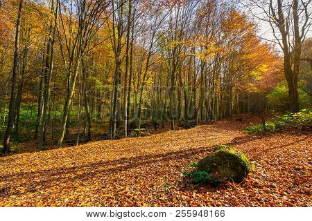 Lovely Forest Scenery In Autumn. Boulder On The Ground In Fall Foliage