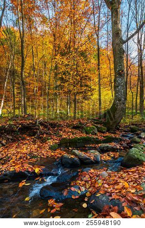 Brook In Autumn Forest. Beautiful Nature Scenery In Fall Colors