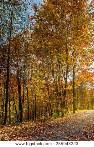 Road Through Forest In Fall Foliage. Beautiful Sunny Background. Nice Place For A Walk