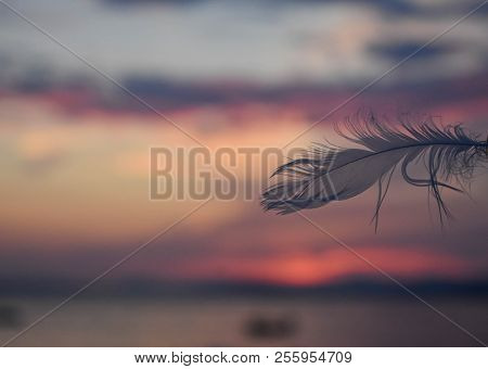 Closeup Of Gentle White Bird Feather Whit Beautiful Pastel Colorful Sky And Sea/ Conceptual Image Of