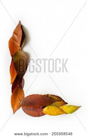 Letter L of colorful autumn leaves. Character L mades of fall foliage. Autumnal design font concept. Seasonal decorative beautiful type mades from multi-colored leaves. Natural autumnal alphabet.