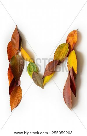 Letter M of colorful autumn leaves. Character M mades of fall foliage. Autumnal design font concept. Seasonal decorative beautiful type mades from multi-colored leaves. Natural autumnal alphabet.