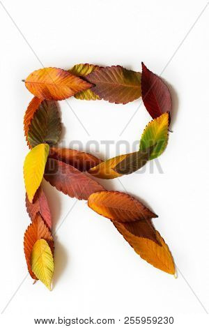 Letter R of colorful autumn leaves. Character R mades of fall foliage. Autumnal design font concept. Seasonal decorative beautiful type mades from multi-colored leaves. Natural autumnal alphabet.