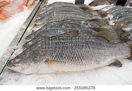 Closeup Group Of Fresh Barramundi Or Asian Sea Bass On Ice