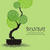 vector stylized bonsai poster
