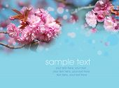 card with spring cherry blossoms and text poster
