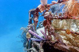 Coral Reef In Carbiiean Sea Underwater Shipwreck