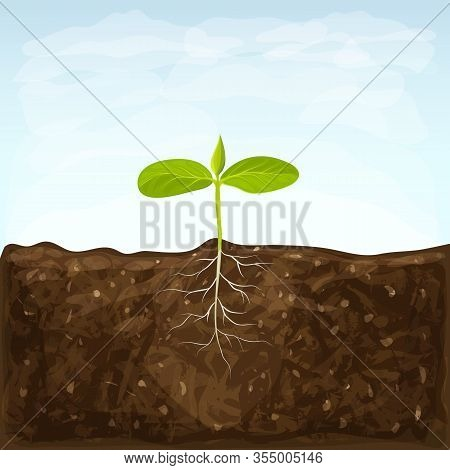 Vegetable Seedlings Growth In Fertile Ground On Blue Sky Background. One Sprout With Root System In