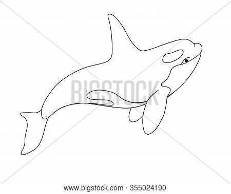 Killer Whale - Vector Linear Picture With Sea Mammal. Оrca Is A Marine Cetacean For Coloring. Beauti