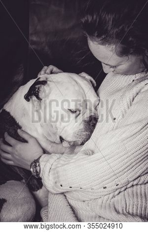 Girl Holding Old English Bulldog, Bulldog Seems In Love With The Young Woman