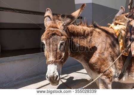 Donkey Are Waiting For Tourists. Using Donkey Taxi To The Acropolis Is A Popular Tourist Attraction