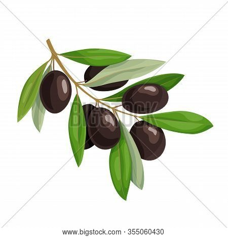 Olive Branch With Black Olives And Green Leaves Isolated On White Background. Natural Ingredient For