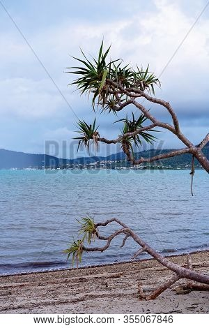 Beach Vegetation Reaching Towards The Ocean With A Rainstorm Approaching Across The Bay Under A Clou