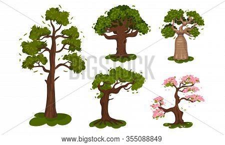 Deciduous Trees With Exuberant Tree Crown Vector Set