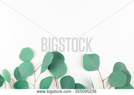 Top View Of Green Eucalyptus Leaves On White Background. Frame Of Evergreen Tree Twigs On Light Back