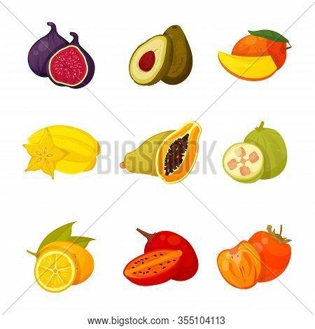 Set Of Exotic Fruits Vector Illustration Isolated On White Background. Sliced Tropical Organic Fruit