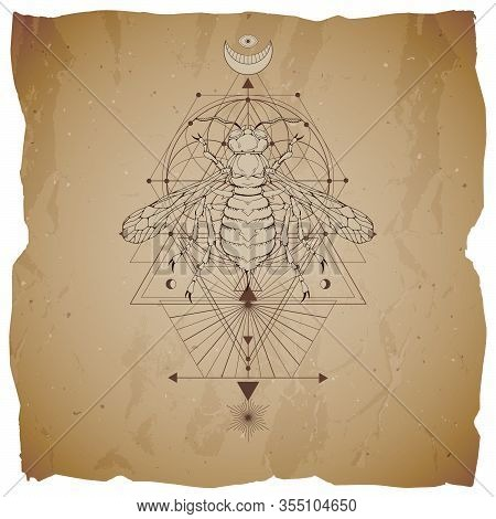 Vector Illustration With Hand Drawn Wasp And Sacred Geometric Symbol On Vintage Paper Background Wit