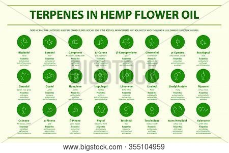 Terpenes In Hemp Flower Oil With Structural Formulas Horizontal Infographic