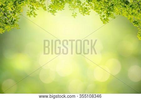 Leaf Background Bokeh Blur Green Background Background