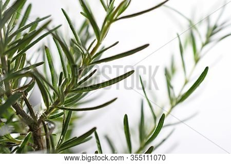 Close-up Of Fresh Green Rosemary On White Background
