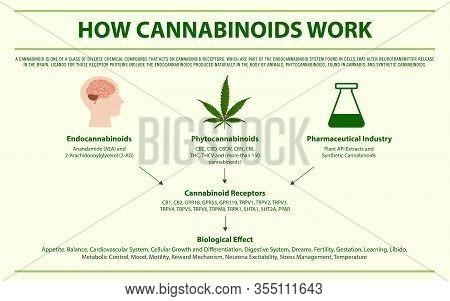 How Cannabinoids Work Horizontal Infographic