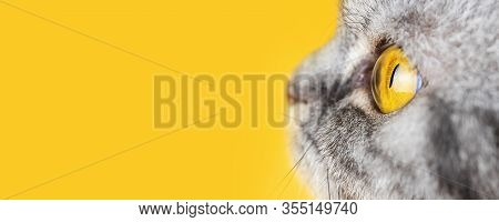 Yellow Eye Of A Gray Striped Cat Close-up. Banner, Yellow Background, Copyspace. Macro Photo. The Co