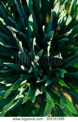 Green Leaves Texture. Grass Abstract Background. Green Foliage, Top View. Leaf Texture Background. E