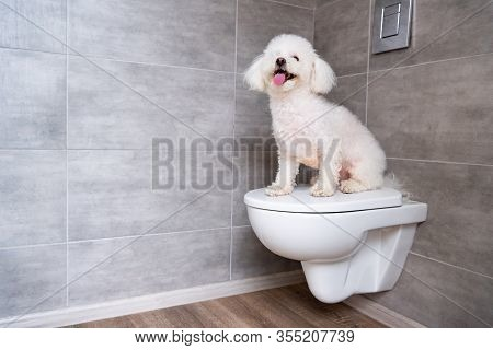 Cute Bichon Havanese Dog Sitting On Closed Toilet In Bathroom